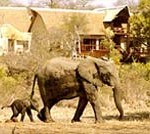 160-wildlife-luxury-safari
