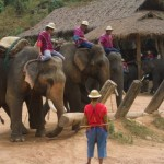 elephnts Chiang Mai