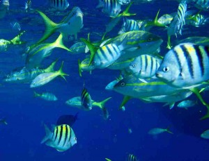bahamas-plongee