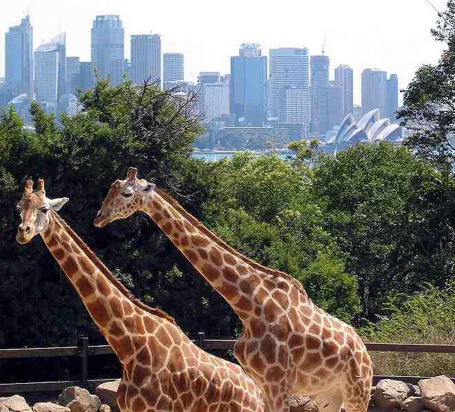 Patient Of The Week At Australia Zoo: ABC Voyage Sydney > Avion Hôtel Séjour Week-end Pas Cher