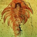 Site_fossilifere_de Chengjiang_patrimoine_unesco